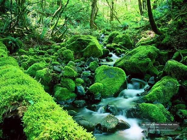 moss-webpage-wallpaper-resized.jpg