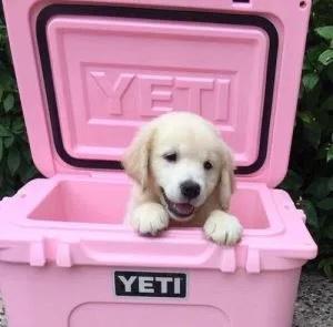 pink-yeti-puppy.jpg
